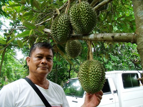 Durian D24 picture from tankahn @Flickr.com